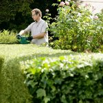 Bosch AHS 50-16 Electric Hedge Trimmer Review