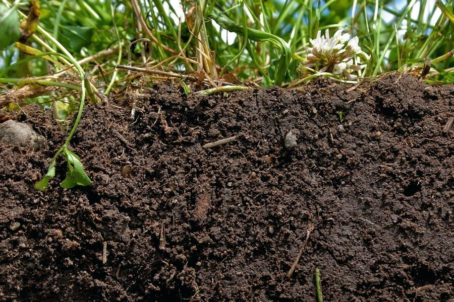 High Quality Organic Soil
