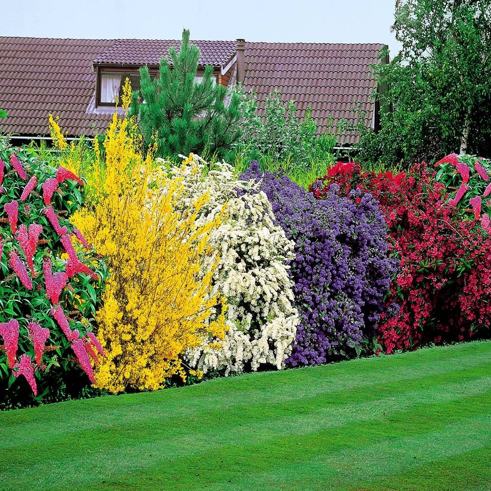 Fast Growing Shrubs London