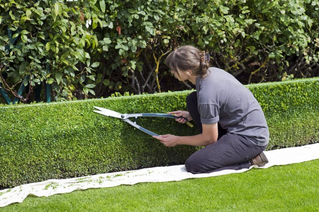 Hedge Trimming With Garden Shears