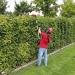 Einhell GE-HC 18 Li T Kit Cordless Extendable Hedge Trimmer Review